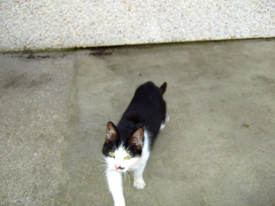sweetcat